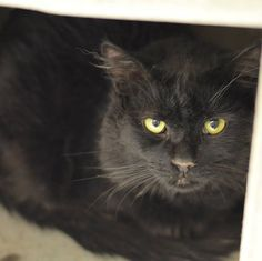 PICKIES (A23491275) Death Row. located at Philadelphia's animal control shelter, ACCT. Needs immediate adoption, rescue or foster care. ACCT is located at 111 W Hunting Park Ave and is open 365 days a year. Adoption hours are are 1-8 Monday through Friday and 10-5 on weekends. To check the status of an animal, call 267-385-3800, or email lifesaving@acctphilly.org