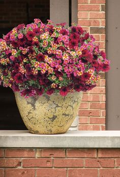 'Let's Get Together' will wow your guests all summer with its easy care color! #ContainerGardening