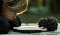 Milk* today (Cath Schneider) - baby hedgehog blowing milk bubbles - lord, how cute Baby Animals, Cute Animals, Small Animals, Fluffy Animals, Animals Images, Mundo Animal, Belleza Natural, Photo Look, Hedges