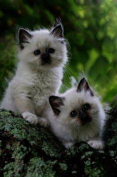 So soft & fluffy! Kittens #kittens