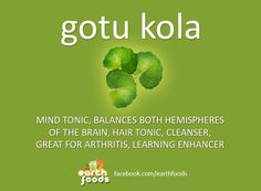 GOTU KOLA - Healing power of plants and Earth foods. Healing Herbs, Medicinal Herbs, Natural Healing, Herbal Plants, Herbal Teas, Benefits Of Organic Food, Health Benefits, Natural Health Remedies, Herbal Remedies