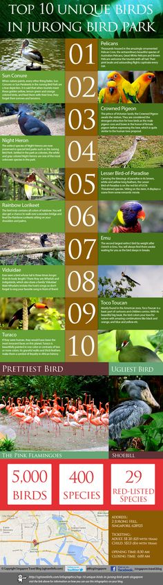 An interesting infographics about top 10 unique birds in Jurong Bird Park Singapore
