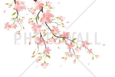 Branch with Pink Flowers - Tapetit / tapetti - Photowall