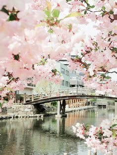 Beautiful Cherry blossoms blooming in Sakura, Japan. (Did you know Sakura means Cherry blossom? Beautiful World, Beautiful Places, Beautiful Pictures, Beautiful Sites, Places Around The World, Around The Worlds, Jolie Photo, Japan Travel, Beautiful Landscapes