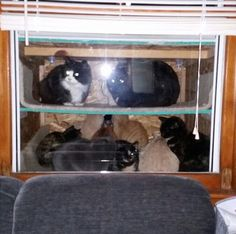 """Dad Builds A """"Cataquarium"""" To Help Freezing Cats.  He lives on a farm (and loves cats)."""