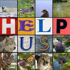 1,324 – The # of species listed as endangered in the United States alone! [750 plants, 574 animals] Count as of May 21, 2010 Endangered Species Day
