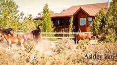 Wild horse fight;  Virginia City, Nevada