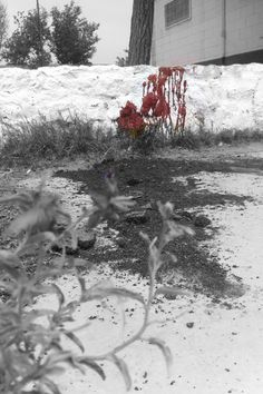 Sangre inocente derramada!
