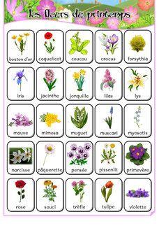 Les fleurs de printemps - imagier et activités