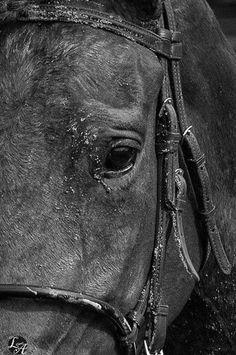Abel Tasman Abel Tasman, Sad Faces, Thoroughbred, Horse Racing, Horses, Animals, Animales, Animaux, Animal