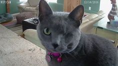 My one-eyed wonder cat was supposed to live for only six months. She's eight years old today! http://ift.tt/2nXRQZQ