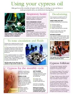 Young Living Essential Oils: Cypress. Learn more about oils at www.theoilessentials.com.