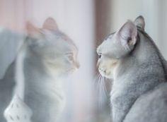 poczucie własnej wartości - Moja Ewolucja I Love Cats, Crazy Cats, Cute Cats, Cat Facts, Weird Facts, Boy Cat Names, Photo Chat, Image Originale, Cat Behavior