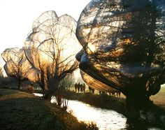 Christo and Jean Claude - Wrapped Trees, Fondation Beyeler and Berower Park, Riehen, Switzerland, 1997-98