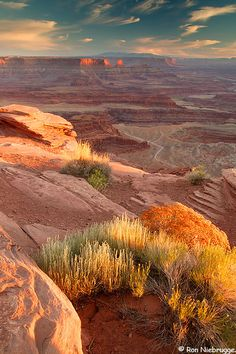 by Ron Niebrugge: Sunset at Dead Horse Point Overlook at Dead Horse point State Park, Utah with Canyonlands National Park in the background All Nature, Amazing Nature, Nature Images, State Parks, Places To Travel, Places To See, Grand Canyon, Canyonlands National Park, Belle Photo