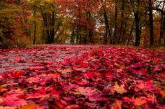 Autumn Leaves - null