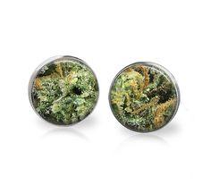 SUNSET SHERBET Marijuana Strain Cannabis Strain by memoryvendor