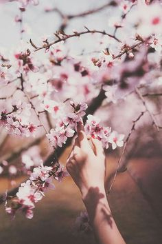 55 trendy wallpaper rosa claro e branco Trendy Wallpaper, Cute Wallpapers, Spring Photography, Portrait Photography, Hand Flowers, Spring Aesthetic, Pin On, Spring Photos, Baby Art