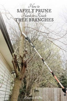 How to safely prune and trim hard-to-reach tree branches without a ladder using Fiskars extendable pole saw and pruner. Sponsored.