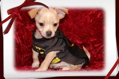 "Fairytailpuppies ""where pets are family too - Puppies Available"