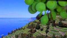 Cinque Terre hiking trails, ITALY