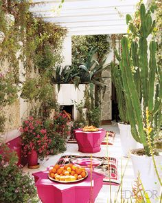 outdoor space with pink and cacti