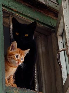 Cats On The Window