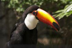 10 Wonderfully Weird Bird Beaks | Audubon Magazine Blog