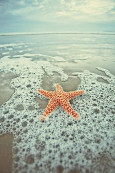 10 Beautiful Starfish & Sea Shell Pictures | (10 Beautiful Photos)
