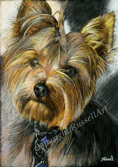 Yorkie -Yorkshire Terrier Dog Size colour drawing ART PRINT by Russellart Yorkies, Morkie Puppies, Rottweiler Puppies, Yorkshire Terrier Puppies, Terrier Dogs, Colorful Drawings, Dog Portraits, Art Plastique, Animal Paintings
