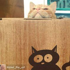 @Regrann from @kapsel_the_cat -  #catlove #kapsel #cats #catnap  #catsofinsta #catsofworld #catsoftheworld #catsofinstagram #bestmeow #bestcatsofinsta #purrfect #persiancat  #meowdel #mainecoon #tabby #turkishangoracat #gingertabby #orangecat #orangetabby #animalsaddict #instacat #instapet #instakitten #petstagram #instafollow #instamood #fluffy #best_meow #fluffycatcrew #catfurnature
