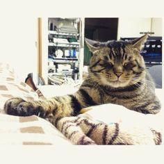 「夜ムサシ。前脚伸ばしておやすみなさい。Good night...  #musashi #mck #cat #キジトラ #ムサシさん」