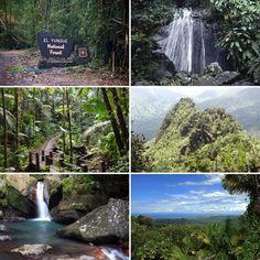 El Yunque National Park, Puerto Rico
