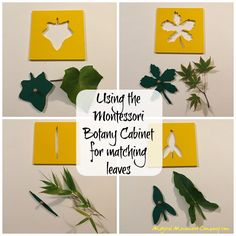 Artfully Outdoorsy in the Montessori Room: Realistic Leaf Drawing from the Botany Cabinet!