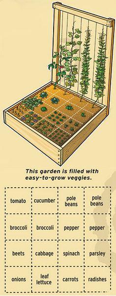 Plant a compact veggie garden