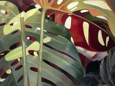 Philodendron II (Carolyn Ritter)