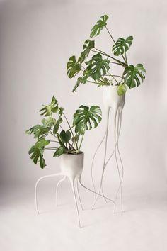 """Vasos criados pelo designer holandês Tim van de Weer. O vaso mais alto chama Monstera Magnifica, e o modelo mais baixo é o Monstera Fugiens (fuga) que, de acordo com o seu criador, referem-se ao caráter de cada vaso. """"As pernas flexíveis dos vasos de plantas dão uma aparência frágil, mas são feitas de aço""""."""