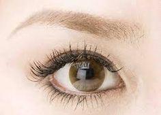 「眉毛」の画像検索結果