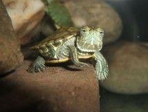 Turtle Animal Photo