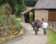Frankreich: Esel-Trekking im Limousin (rf) In Frankreich findet man Eselfarmen vor allem im ländlichen Regionen, die dünn besiedelt sind. Ideale Voraussetzungen für naturnahe Erholung, abseits der klassischen Touristenpfade. ...  Mehr: http://www.reisefernsehen.com/reise-news/reise-news-aktivurlaub/387115a2dd10d780e-frankreich-esel-trekking-im-limousin.php