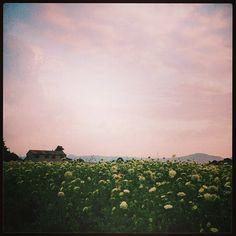 Campagna, Cesena - Instagram by @cinziaclick
