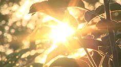 Sun Flare Stock Footage Video - Shutterstock