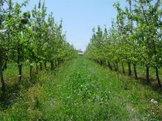 organic farming is eco friendly! http://news.mongabay.com/2006/0306-pnas.html
