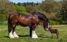 Paard & ezel je