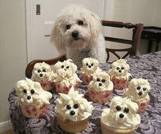 Nolia cupcakes!