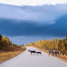 Nordic rushour.  @exploreinari by kpunkka