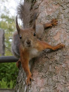 Orava se on...