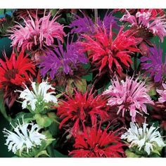 Deer Busters The Top Resistant Plants For Northeast