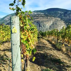 Plan a getaway to B.C.'s Oliver Osoyoos Wine Country