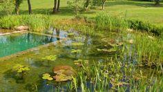 Várias palavras servem para definir o conceito de piscinas biológicas, dentre elas: piscinas naturais, piscinas ecológicas, biopiscinas…Há relatos que as primeiras delas foram construídas na Áustria, nos anos 70. De um modo geral, trata-se de um mix entre uma piscina tradicional e um lago artificial. Neste caso, parte da piscina é destinada para o banho …